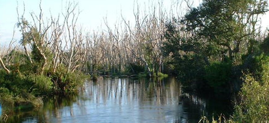 Environmentalists Oppose Plans to Drill for Oil in the Everglades