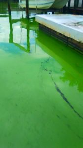 Algae Crisis: Send Letter to Elected Officials with one click