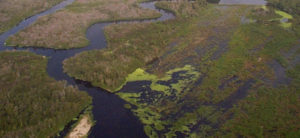 $2 Billion for Everglades not a silver bullet for toxic algae