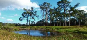 Call to Action: Urge Martin County Commissioners to Save Wetlands