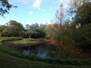 The Benefits of Small Wetlands
