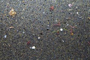 Microplastics plague the lagoon