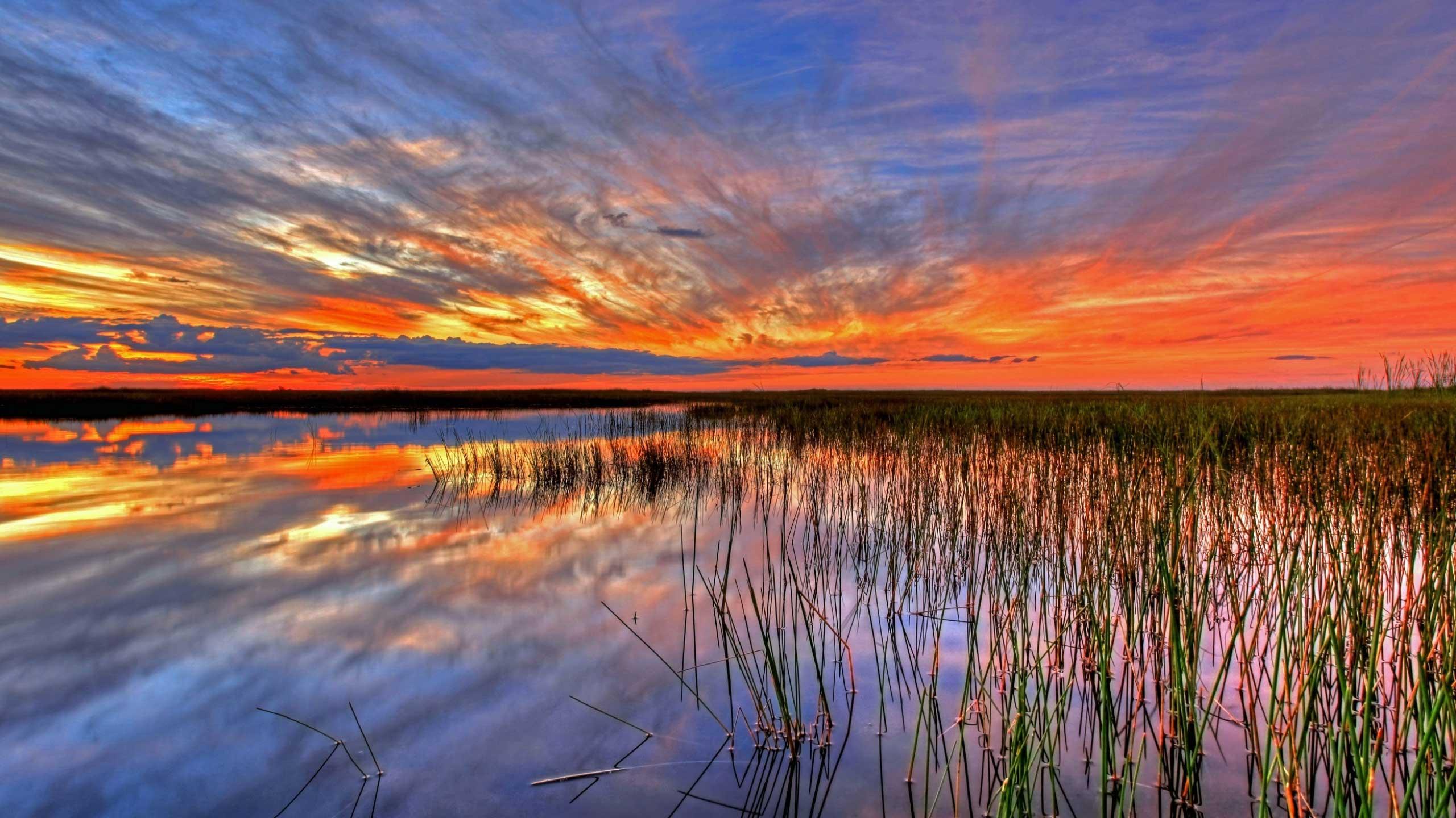 web_everglades_swamp_florida_106286_2560x1440